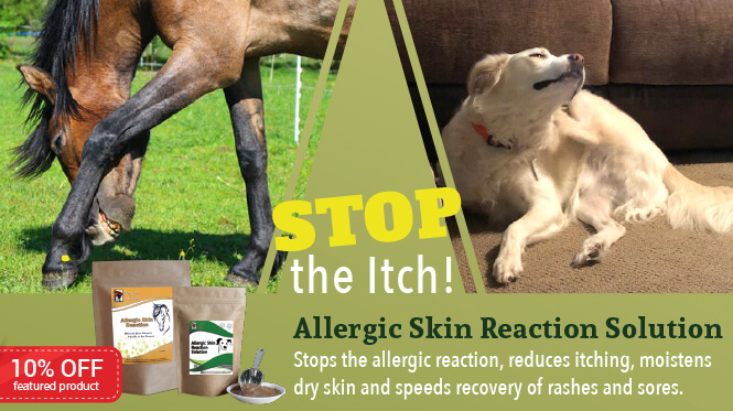 10% Off Allergic Skin Reaction for Horses and Dogs