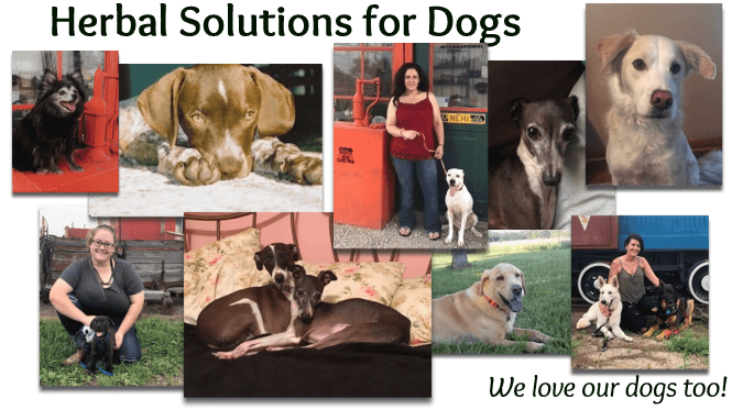 Herbal Solutions for Dogs