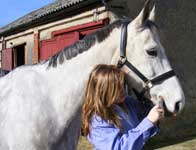 Administering Horse Health Herbs